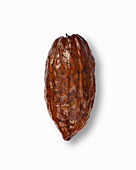 A cocoa pod on a white background