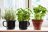 Thyme, basil and parsley in handle and clay pots on a windowsill