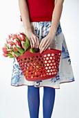 Tulipa 'Dutch Design'