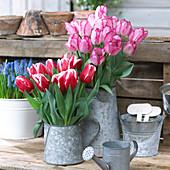 Strauß aus Tulpe 'Just Kissed'