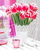 Tulipa 'Marrero'