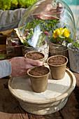 Töpfe mit Saatgut ins Kalthaus stellen