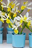Iris in der Vase