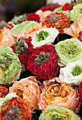 Grassheart Roses