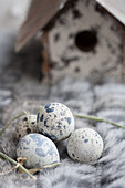 A nesting box with quail eggs