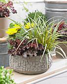 Carex morrowii 'EverColor ® Everglow'