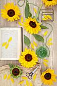 Helianthus annuus 'Sunrich Orange Summer Provence'