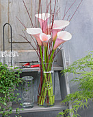 Zantedeschia aethiopica 'Flamingo'