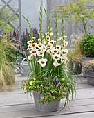 Weiß-rote Gladiolen und Zauberglöckchen in Zink-Gefäß