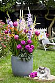 Dahlia, Gladiolus, Crocosmia im Kübel