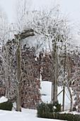 Rosenbogen und Hecke im Winter