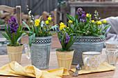 Blechtöpfe mit Hyazinthen, Winterlingen und Puschkinien als Tischdekoration