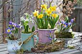 Frühling in zweckentfremdeten Haushaltsgefäßen: Krokus 'Tricolor', Milchstern, Narzisse 'Tete a Tete'