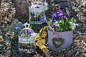 Vogelkäfig und Flechtkorb bepflanzt mit Krokus und Milchstern, Moosherz