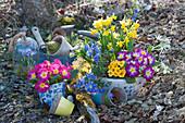Bunte Frühlingsblumen in Töpfen im Garten