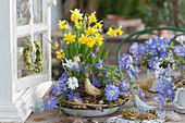 Frühlingsschale mit Narzissen 'Tete a Tete' und Strahlenanemone, Holz-Vögel als Deko