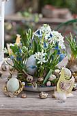 Schale mit Traubenhyazinthen und Milchstern österlich dekoriert mit Ostereiern und Holz-Huhn