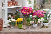 Frühlingsdeko mit Primeln, Traubenhyazinthen, Krokus und Milchstern