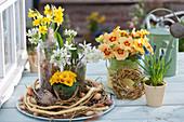 Frühlingsdeko mit Primeln, Narzissen, Milchstern und Traubenhyazinthen
