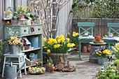 Osterterrasse mit Felsenbirne, Osterglocken, bepflanzter Kasten und Zinkeimer