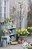 Osterterrasse mit Felsenbirne, Osterglocken, bepflanzter Kasten und Zinkeimer, Hund Zula