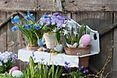 Töpfe mit Hornveilchen Rocky 'Lavender Blush', Traubenhyazinthe und Schneestolz in Wandhänger österlich dekoriert