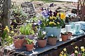 Frühling in Töpfen auf der Gartenmauer