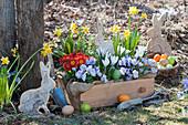 Ostern im Garten: Hornveilchen, Primeln, Krokusse, Narzissen, Osterhasen und Ostereier