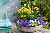 Frühlings-Schale mit Narzissen, Blaukissen, Hornveilchen und Primeln