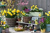 Osterterrasse mit Narzissen, Tulpen, Goldlack und Traubenhyazinthen, Korb mit Ostereiern