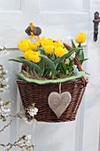 Gelbe Darwin-Tulpen 'Garant' im Korb mit Herz Anhänger