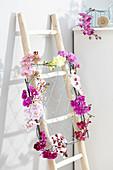 Gemischte Blütenstiele von Phalaenopsis als Dekoration an Leiter gebunden