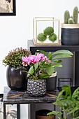 Topf Arrangement mit Phalaenopsis