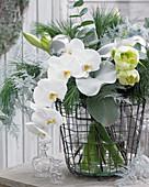 Weihnachtsstrauß mit Phalaenopsis, Hippeastrum, Senecio 'Angel Wings'