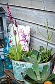 Jardiniere mit Wasserpflanzen als Mini-Teich auf der Terrasse