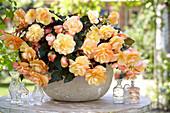 Begonia 'Fragrant Falls ® Peach'