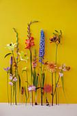 Blüten von Lythrum, Gladiole, Dahlie, Rittersporn, Lilie und Montbretie vor gelber Wand