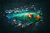 Colourful parrot fish on ice