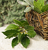 A sprig of bay leaves next to a wicker basket