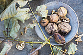 Walnuts in a wooden bowl with walnut leaves