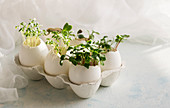 Microgreens in the eggshells, spring and easter concept