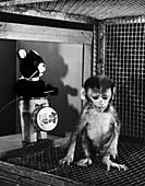 Primate Fear Testing