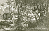 Prehistoric, Miocene Landscape