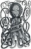 Octopus, 18th Century