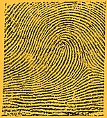 Typical Loop Pattern, 1900