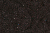 Barnard 138, Black Lizard