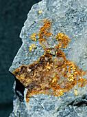 Gold on Quartzite