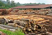 Rainforest Sawmill