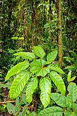 Rainforest plant