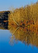 White Oak Pond
